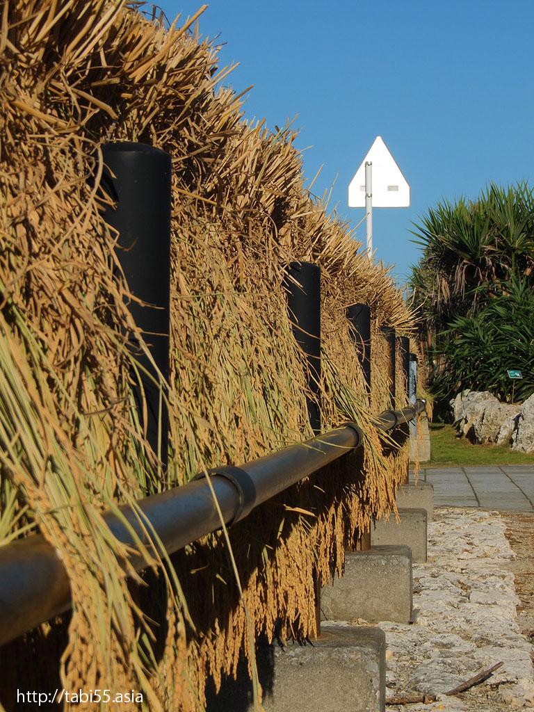 ガードレールの稲干し 与論島の風景(鹿児島県与論島)