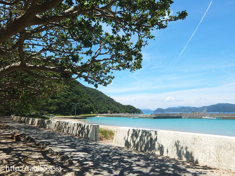 ディゴ並木(鹿児島県加計呂麻島)