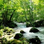 夏の奥入瀬渓流(青森県十和田市)/Summer Oirase Stream (Towada, Aomori )