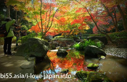 【地図付き】東京都内の紅葉スポット。おすすめの名所も穴場もライトアップも。