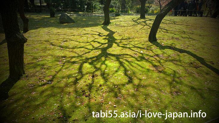 冬の終わり、春の訪れを告げる梅!小石川後楽園の梅園