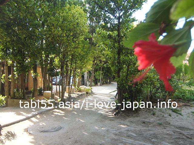 沖縄の原風景!備瀬のフクギ並木