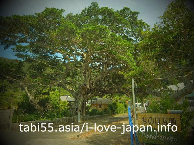 大きな樹木に夢中!生間港から、フェリーで奄美大島へ帰還