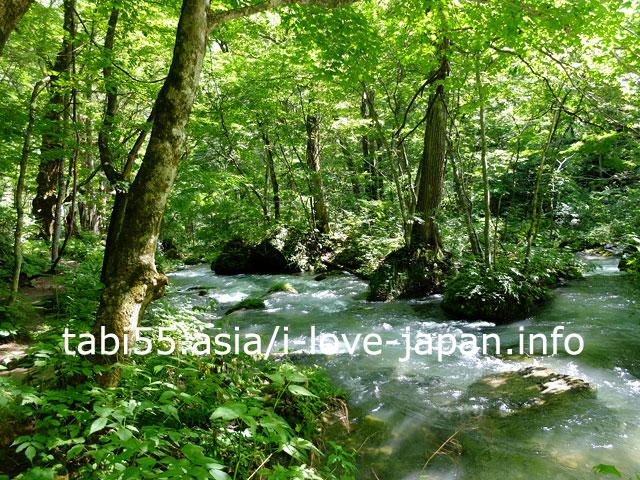 子の口から石ケ戸まで!奥入瀬渓流を散策