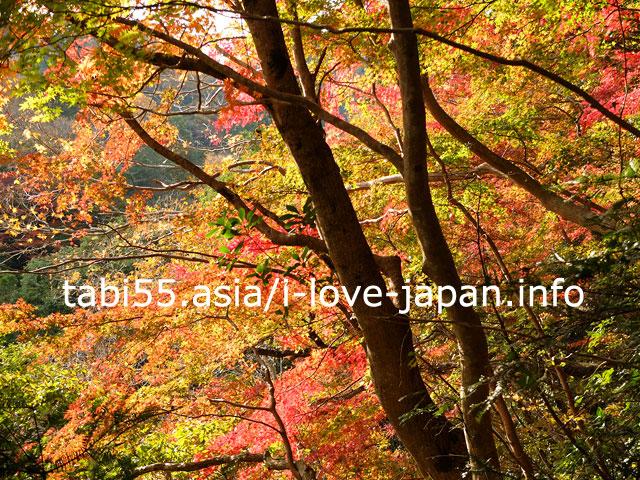 紅葉の養老渓谷!大福山・梅ケ瀬ハイキングコースを散策