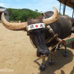 由布島と水牛車(沖縄県西表島/由布島)