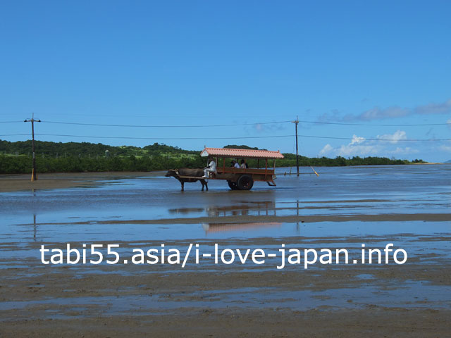 西表島(由布島)の絶景!もう一度、水牛車を愛でてみた