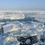 流氷:Drift ice(北海道網走市)