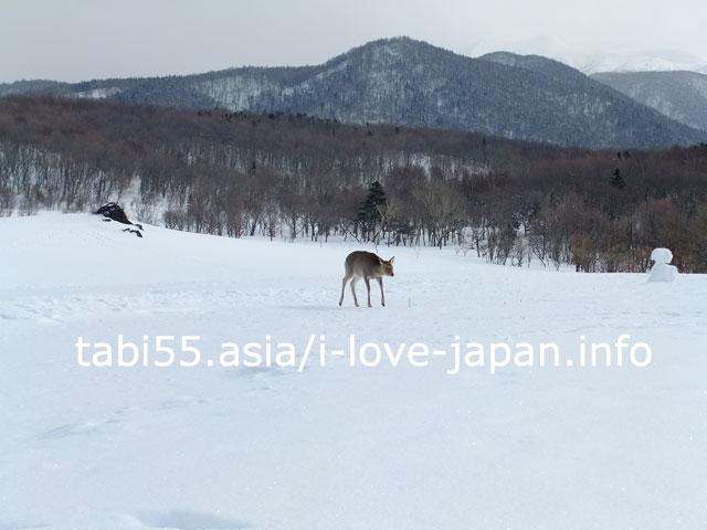 知床自然センターで、フレペの滝へ雪中お遊歩