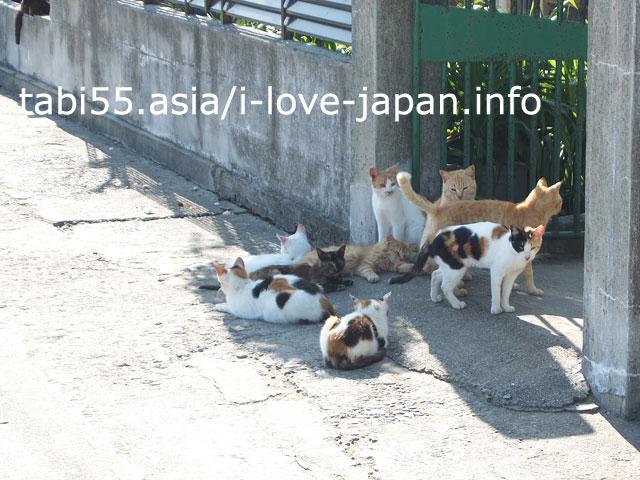 男木島と言えば。アートと猫!