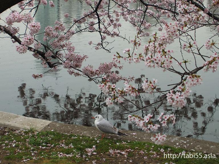 不忍池|上野東照宮の参道|上野恩賜公園(東京都台東区)/Ueno Park (Taito-ku, Tokyo)