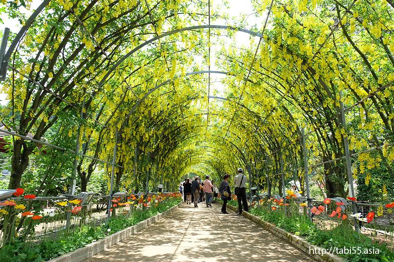 きばな藤のトンネル の棚@あしかがフラワーパーク(栃木県)/Ashikaga Flower Park (Tochigi Prefecture)
