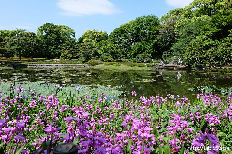 亀甲竹@本丸@天守閣@皇居東御苑(東京都千代田区)/The East Gardens of the Imperial Palace (Chiyoda-ku, Tokyo)