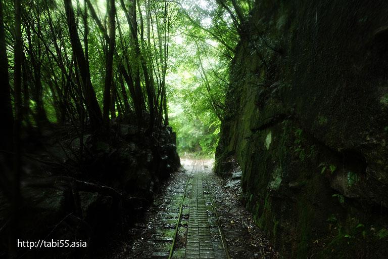 トロッコ道@縄文杉トレッキング(屋久島)/Jomon cedar trekking (Yakushima)