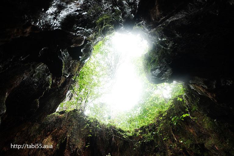 ウィルソン株@縄文杉トレッキング(屋久島)/Jomon cedar trekking (Yakushima)