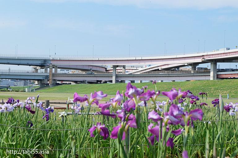 堀切水辺公園(東京都葛飾区)/Horikiri waterfront park (Katsushika-ku, Tokyo)