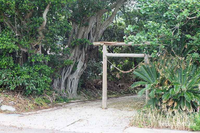 南国ムードが漂う樹木と、鳥居