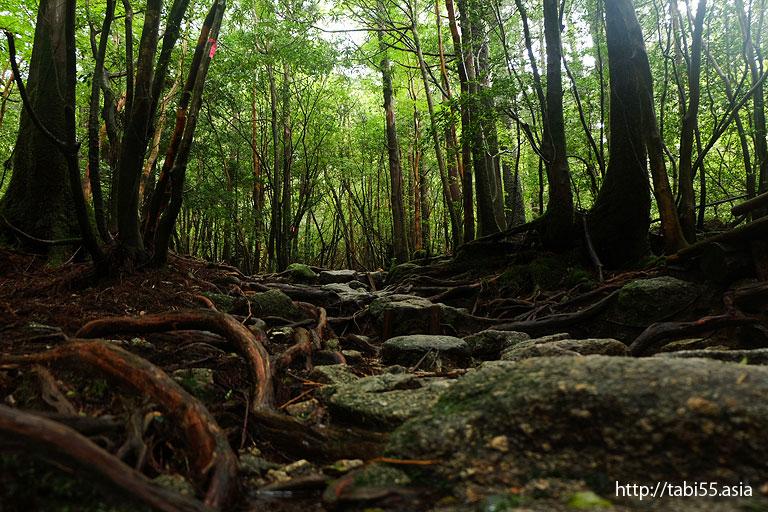 石でできた山道@白谷雲水峡