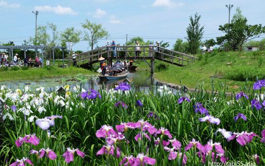 水郷佐原水生植物園(千葉県香取市)/Suigo Sawara Aquatic Botanical Garden ( Katori Chiba)