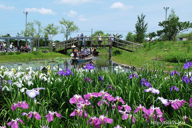 水郷佐原あやめパーク(旧:水郷佐原水生植物園)千葉県香取市