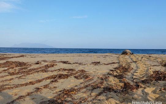 ウミガメの産卵@永田いなか浜(屋久島)/Sea turtles spawning at Nagata Inaka beach(Yakushima)