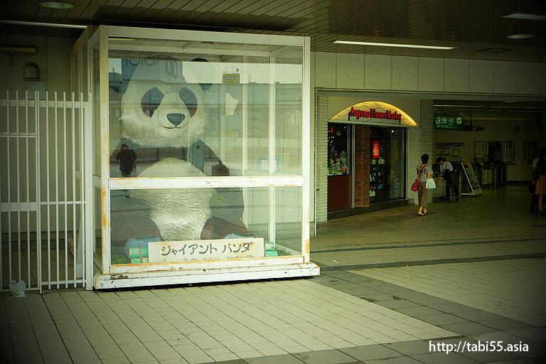 パンダ橋のジャイアントパンダ/Giant Panda of Panda Bridge