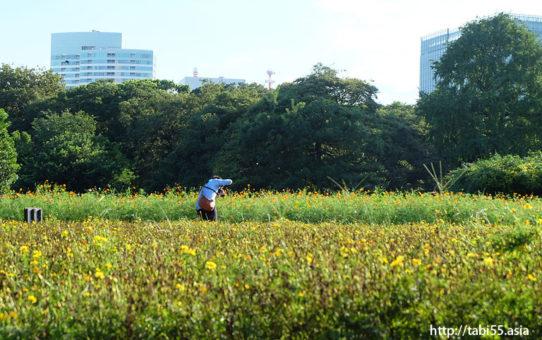浜離宮恩賜庭園(東京都中央区)/Hamarikyu garden (Chuo-ku, Tokyo)