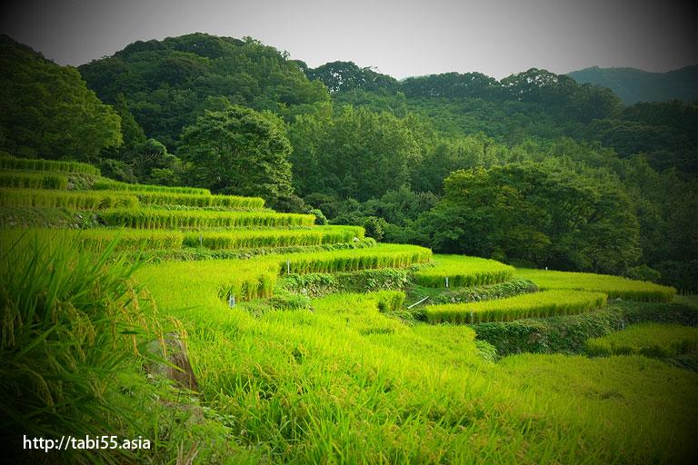石部棚田(静岡県)/Ishibe rice terrace (Shizuoka)
