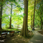 石神井公園(東京都)