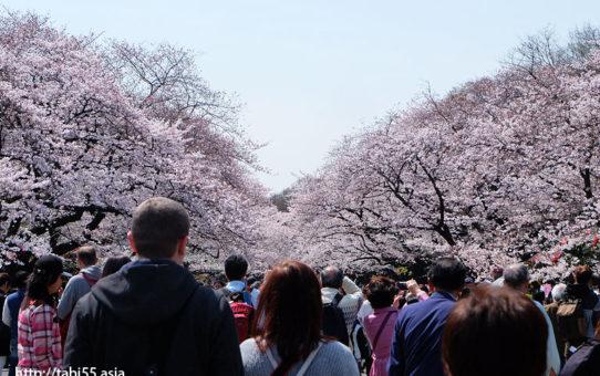 上野恩賜公園の桜!モデルコース