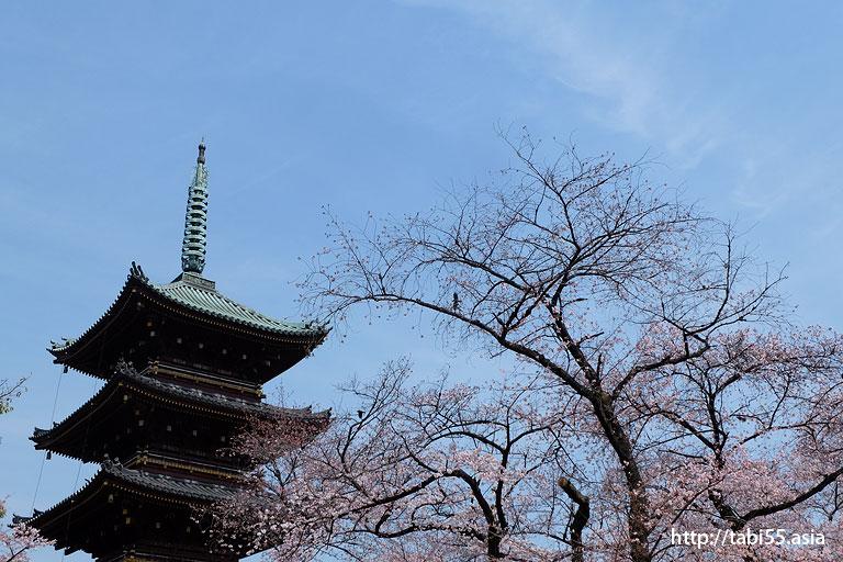 五重塔@上野恩賜公園の桜!モデルコース