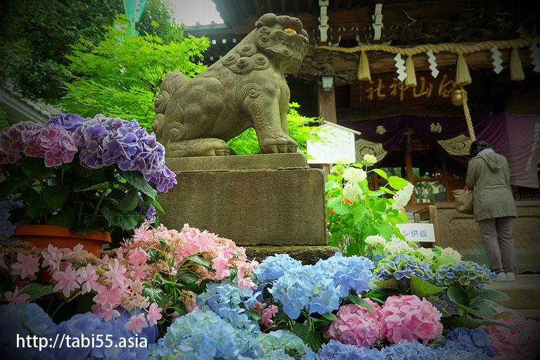 あじさい祭り@白山神社(東京都文京区)