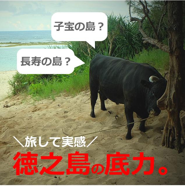 徳之島をひとり旅した観光ルート!インスタ映えも?15選(鹿児島県/奄美諸島)