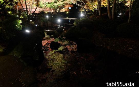 新宿から20分!大田黒公園の紅葉はライトアップのみならず!昼も美しい(東京都杉並区)
