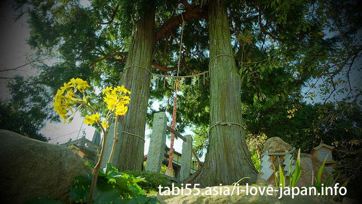 武雄神社の大楠!樹齢3,000年の御神木に圧倒される(佐賀県武雄市)