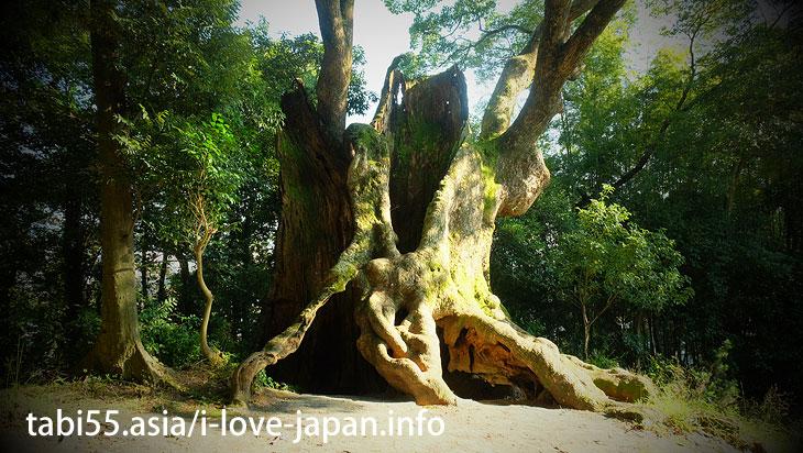 Takeo Onsen walking area! Okusu(camphor trees) of Tsukazaki