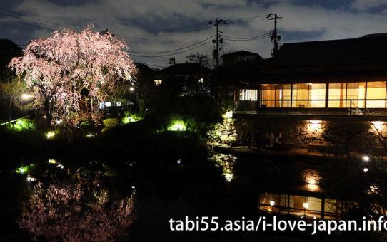 池袋の桜の名所!駅から徒歩+公共交通機関で【30分以内】