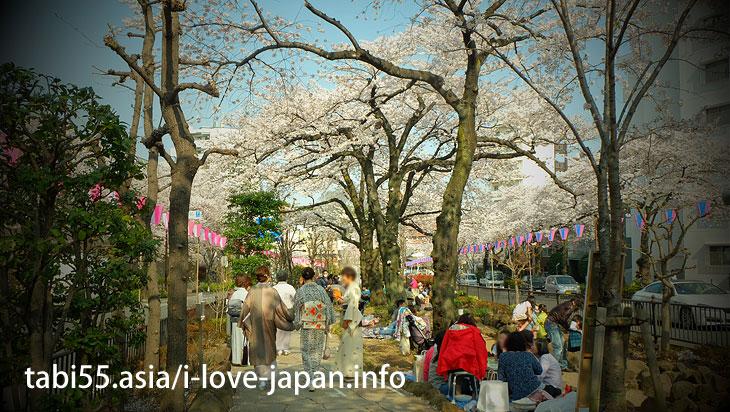播磨坂さくら並木|池袋駅から30分以内の桜の名所