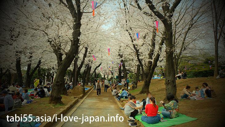 飛鳥山公園|池袋駅から30分以内の桜の名所