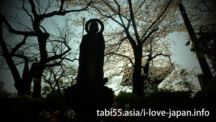 護国寺|池袋駅から30分以内の桜の名所