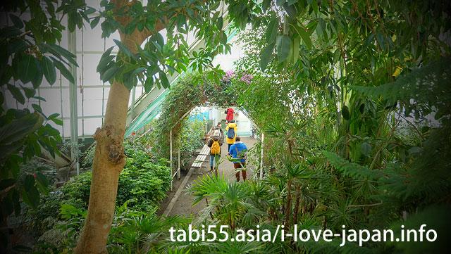 函館市熱帯植物園でお猿さんの温泉入浴を見学
