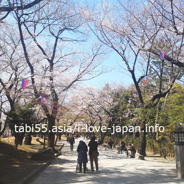 飛鳥山公園は、何処をみても、桜だらけ!