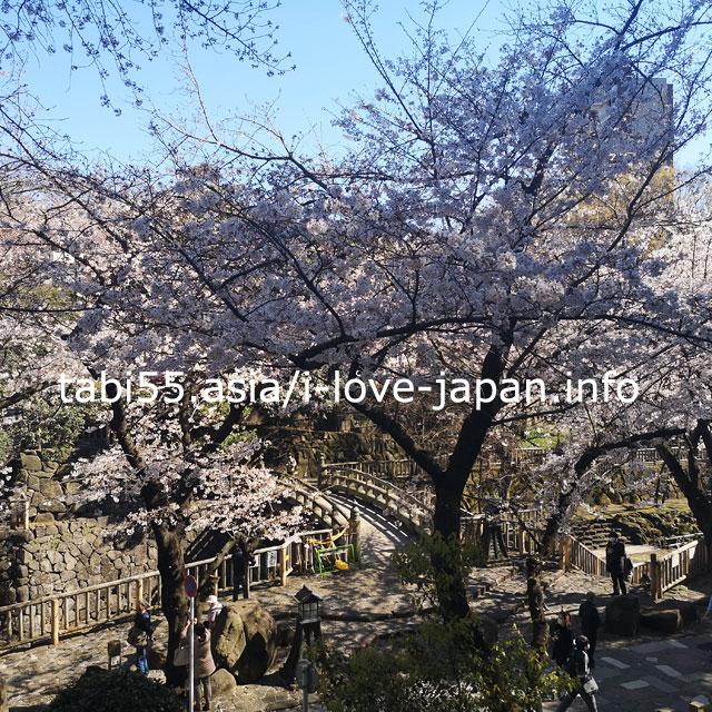 音無親水公園にも桜が!花見を楽しみましょう