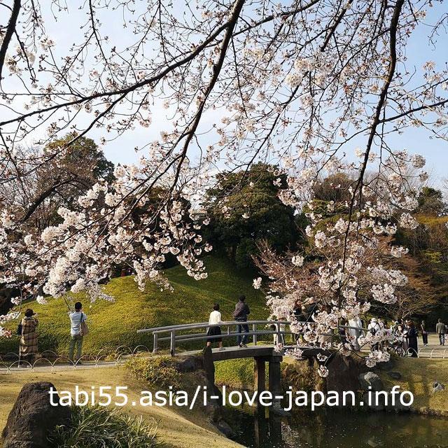 池に映る逆さ桜が見事!小石川後楽園