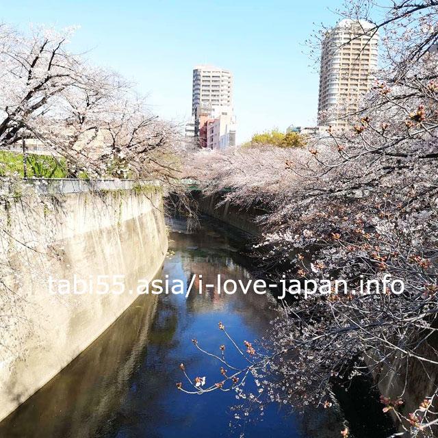 川面に映る桜、さくらトラムとリアル桜を写せる面影橋エリア