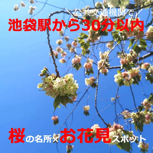 池袋駅から電車・バスで30分以内!桜の名所でお花見!おすすめ【12選】穴場も