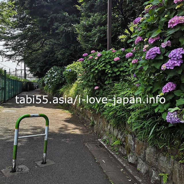 飛鳥山公園の京浜東北線沿い!飛鳥の小径で紫陽花を愛でましょう