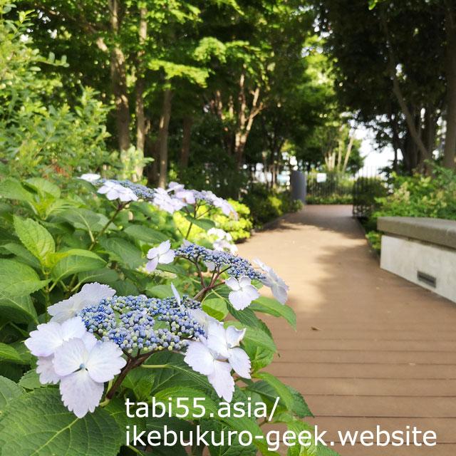 豊島区役所にある、空中庭園!豊島の森