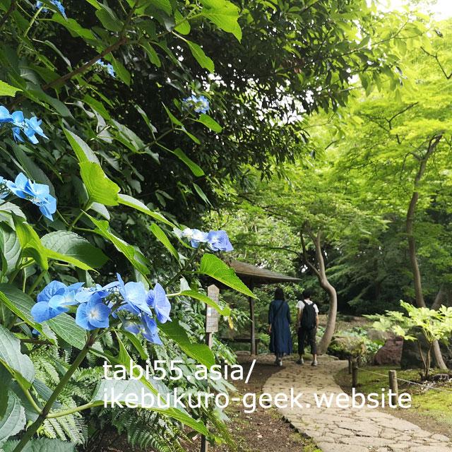 六義園で紫陽花と新緑のコラボを堪能