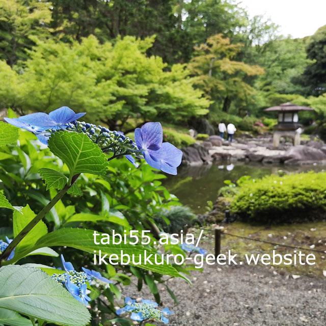 薔薇園だけじゃない。植治(うえじ)の日本庭園も必見!旧古河庭園